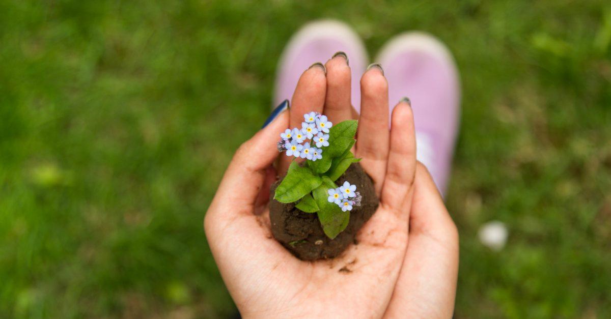 Descobrindo Provérbios: Cultivando a Sabedoria Para a Eternidade