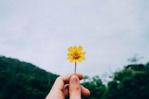 Descobrindo Provérbios: Abraçando os processos por inteiro