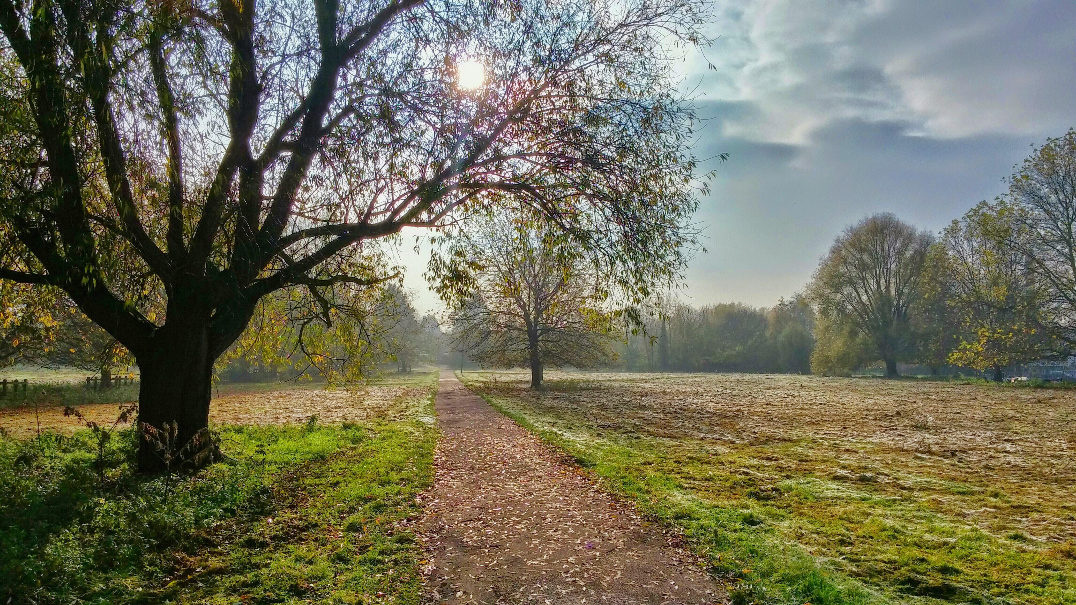 Um caminho na floresta ao encontro de Jesus