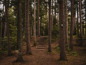 Vida de oração: Jesus e sua vida no secreto