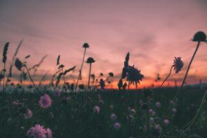 Um amor que transforma destinos