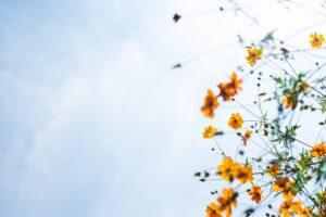 fruto-do-espirito-paz-de-Deus